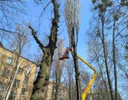 ЖЕД № 904: кронування дерев