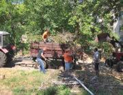 ЖЕД № 901: вивезення дерев'яних колод та гілля