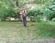 ЖЕД № 901: покос трави