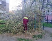 ЖЕД № 901: прибирання впавших дерев