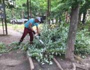 ЖЕД № 901: розпилювання впавших дерев