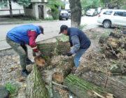 ЖЕД № 903: вивезення дерев'яних колод