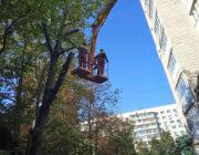 ЖЕД № 901: кронування дерев