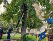 ЖЕД № 904: санітарна обрізка дерев