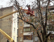 ЖЕД № 903: кронування дерев